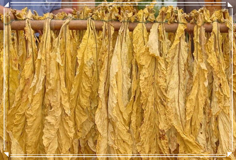 Tobacco agriculture and basement management - Tobacco